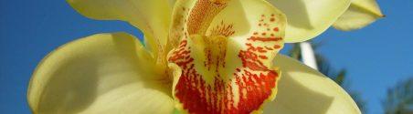 cropped-orchid_flower_petals_macro.jpg