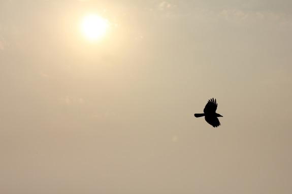 flying-389885_1920.jpg